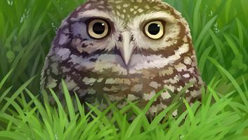 Rajzolva tanulok: A kishegyesi Greenhead Környezetvédő Egyesület pályázata - illusztráció