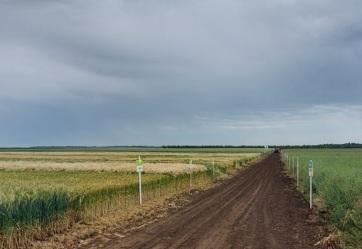 Kalászosok fajtabemutatóját tartották meg Topolya közelében - A cikkhez tartozó kép
