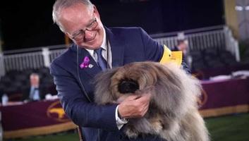 Egy pekingi palotakutya nyerte el a fődíjat a legrangosabb amerikai kutyakiállításon - illusztráció