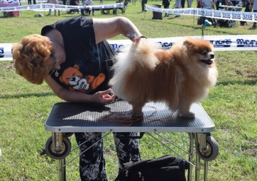 Pacsér: Drótszőrű német vizsla lett a legszebb kutya - A cikkhez tartozó kép