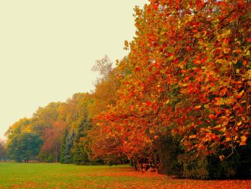 Az őszi felmelegedéssel megbomlik a természet körforgása - A cikkhez tartozó kép