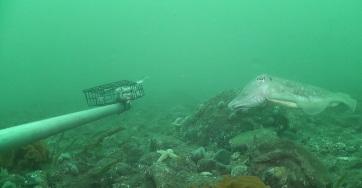 A tengeri természetvédelmi területek négyszeresére növelhetik a halállományt - A cikkhez tartozó kép