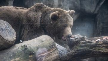 Egy nap alatt két embert is medve támadott meg Székelyföldön - A cikkhez tartozó kép