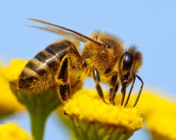 Az összes termény háromnegyedének léte függ a beporzó állatoktól
