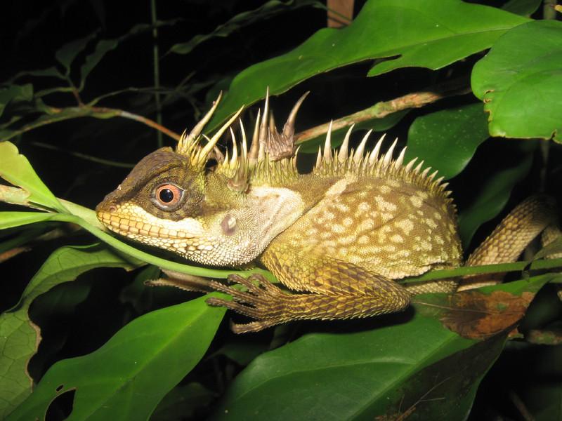 Több mint 150 új fajt találtak a Mekong-régióban