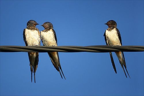 Hamarabb kelnek útra a költöző madarak