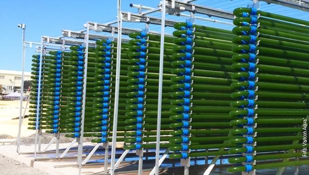 NATO: Algából nyert bioüzemanyagot kutatnak szerb tudósok