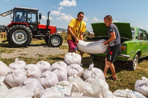 Helyi magyar gazdák búzát pakolnak a Magyarok kenyere - 15 millió búzaszem program Kárpát-medencei búzaösszeöntő ünnepségen a Beregszász melletti Mezőgecsében